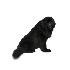 Pet City Pet Shops Newfoundland