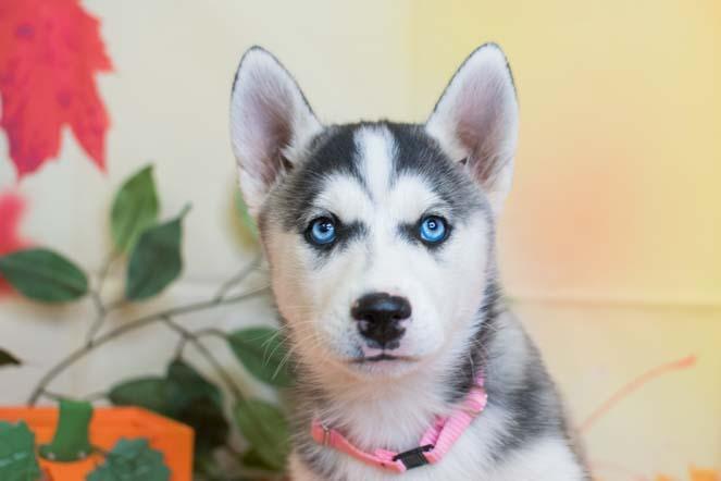 21957 2289 Pet City Pet Shops