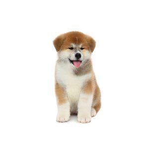 Pet City Pet Shops Akita