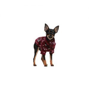 Pet City Pet Shops Miniature Pinscher