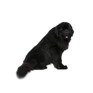 Pet City Pet Shops Newfoundland