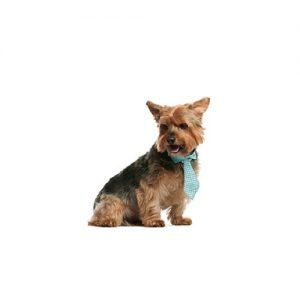 Pet City Pet Shops Norwich Terrier