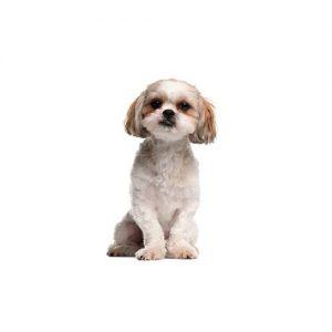 Pet City Pet Shops Peek-A-Poo