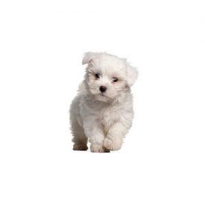 Pet City Pet Shops Pom-Poo