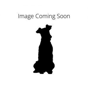 Pet City Pet Shops Redbone Coonhound